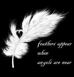 angel I feathers I signs I meaning I quote
